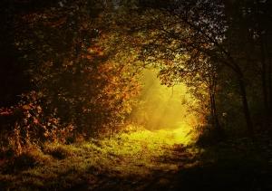 szép-képek-reggeli-erdő-6